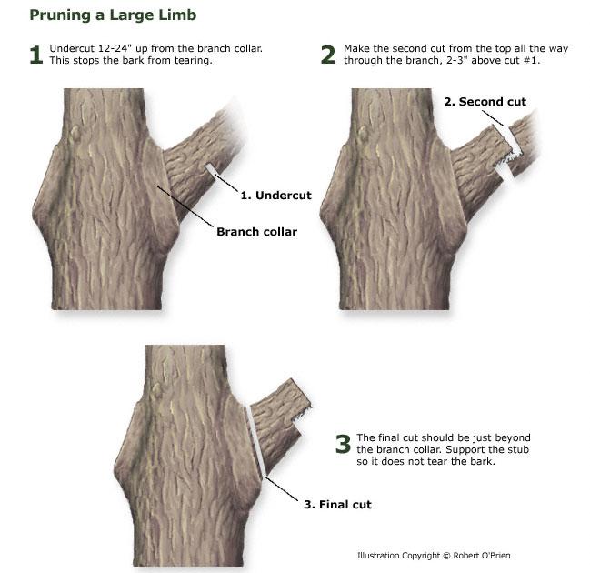 3-cut method pic